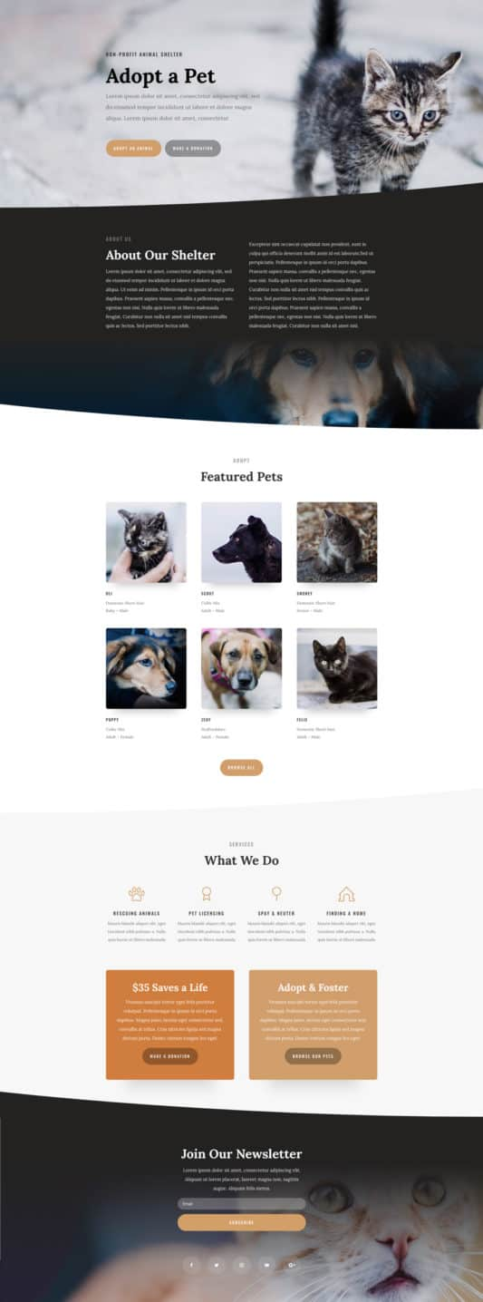 The animal shelter template is perfect for animal shelters, animal adoption, and other such organizations.